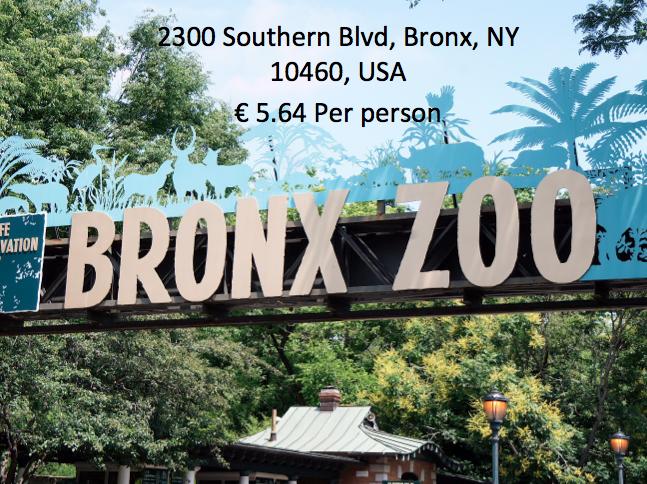 Bronx Zoo Math