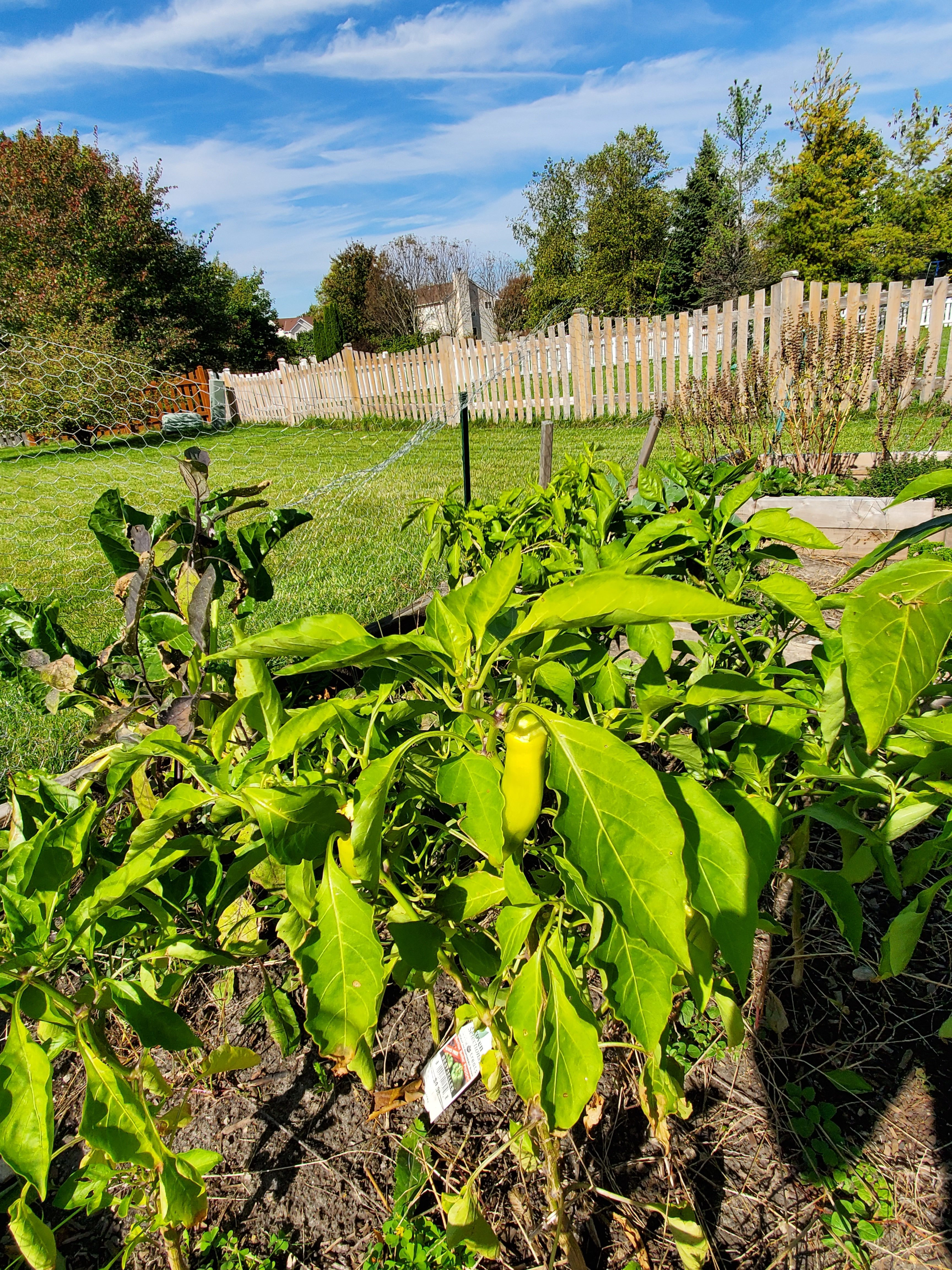 Earth Stewardship Project Story Pic 4 Greg Reiva