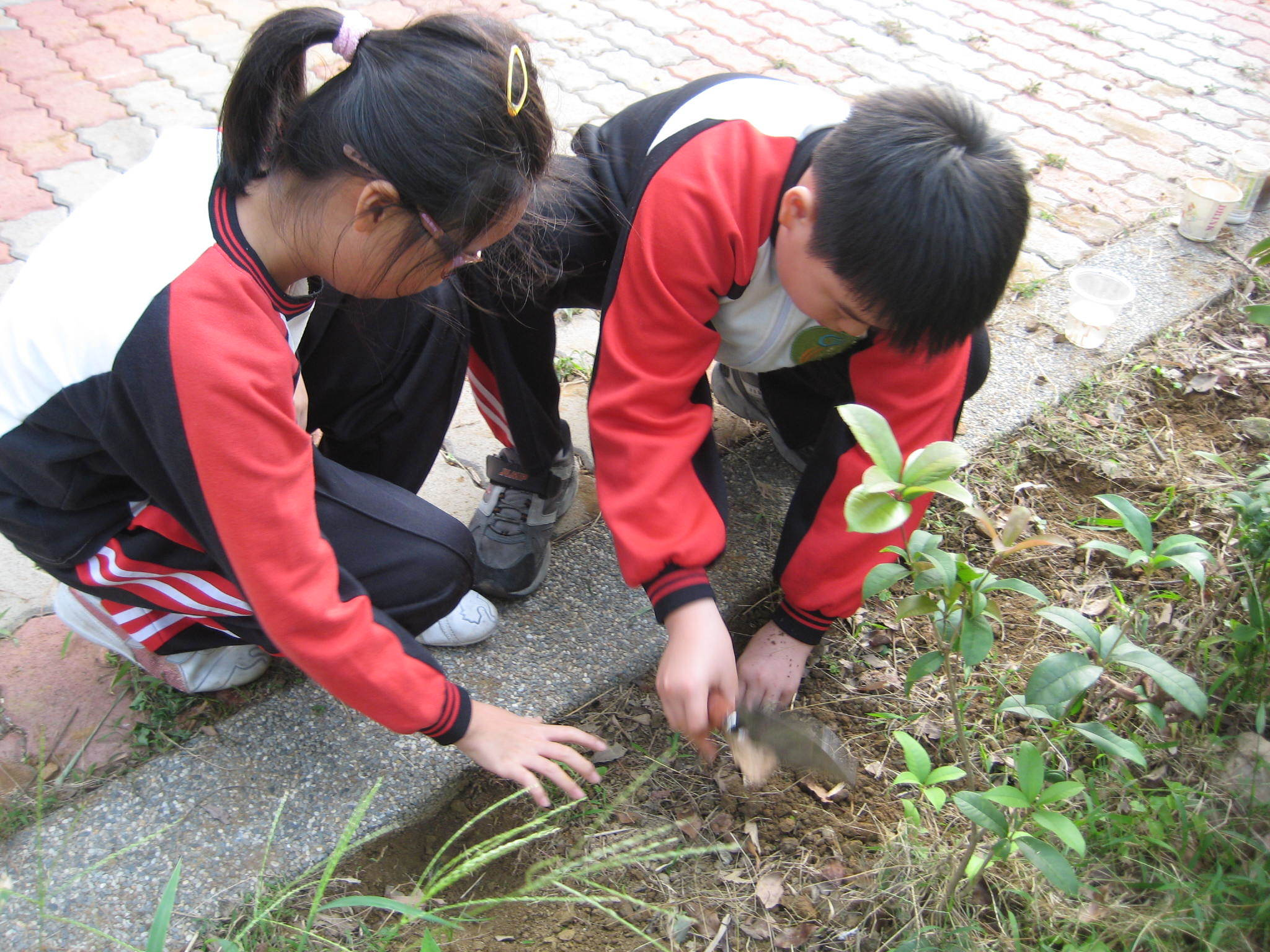 Taiwan Planting