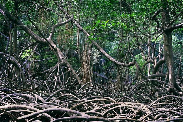 Tres Bosques Success Story